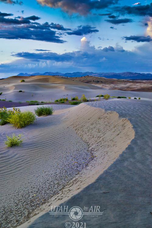 Little Sarah sand dunes Utah.