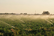 Israel, Negev Desert, field irrigation with sprinklers a wasteful watering method