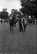 """15/07/1967<br /> 07/15/1967<br /> 15 July 1967<br /> Hennessy Handicap at Leopardstown Races, Leopardstown Racecourse, Co. Dublin.  Robert Gloverson of owners Mr and Mrs J.A.N. Glover of Moneymore, Co. Derry leading in """"My Kuda"""", winner of Hennessy Handicap 1967 at Lepardstown. Jockey is T.P. Burns."""