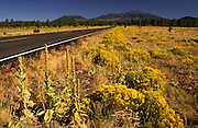 Rabbitbrush & sage, San Francisco Peaks behind, Highway 180, West of Flagstaff, Arizona..Subject photograph(s) are copyright Edward McCain. All rights are reserved except those specifically granted by Edward McCain in writing prior to publication...McCain Photography.211 S 4th Avenue.Tucson, AZ 85701-2103.(520) 623-1998.mobile: (520) 990-0999.fax: (520) 623-1190.http://www.mccainphoto.com.edward@mccainphoto.com