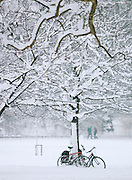 Bicycles propped by a tree in St James Park, covered in snow, in London, UK