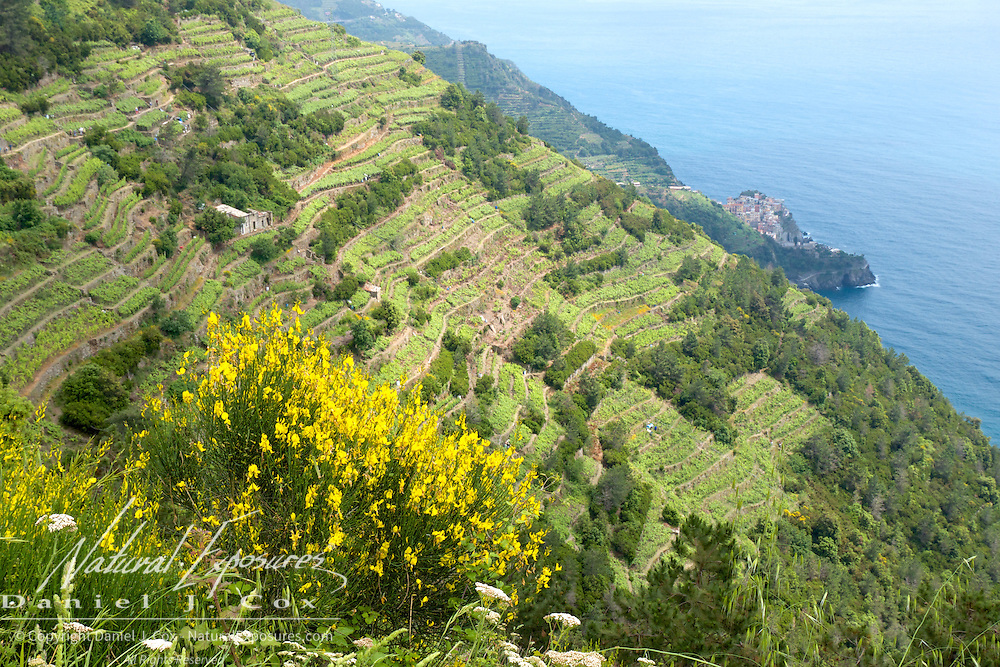 Looking down in to the city from Manarola, Italy