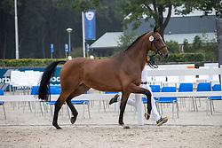 020, Mica<br /> Nationaal Kampioenschap KWPN<br /> 3 jarige springmerries<br /> © Hippo Foto - Dirk Caremans<br />  15/08/2020