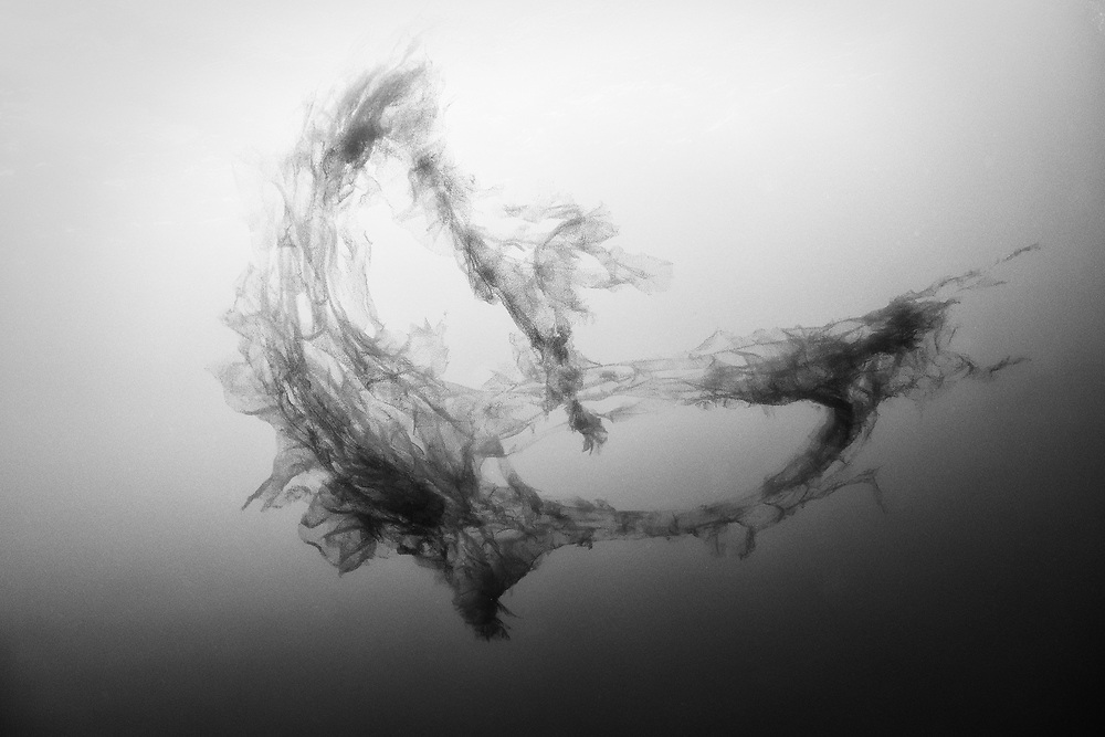 Remains of an unknown Siphonophore specimen near Malpelo Island, Colombia.