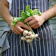 Chef Mathew Fisher holds a bunch of baby white turnips at The Three Chimneys Restaurant, Colbost, Isle of Skye, Scotland. White turnips are among the wide selection of fresh vegetables that Anthony Hovey grows at Totaig, 2 miles from The Three Chimneys. Chef and director Michael Smith and his kitchen team, create dishes which reference Scotland's rich culinary heritage and wealth of ingredients. Their menus reflect the variety of Skye's natural larder from the land and sea.