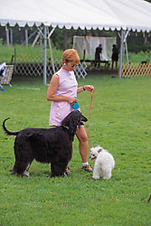 Woman With Big & Little Dogs