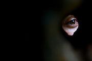 Rio de Janeiro_RJ, Brasil...Detalhe de um olho da fechadura do Jardim Botanico do Rio de Janeiro...Detail of a eye in Botanic Garden in Rio de Janeiro...Foto: JOAO MARCOS ROSA / NITRO