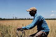 Un indiano sikh in bicicletta per le vie dell'agropontino, Sabaudia (Latina), Giugno 2014.  Christian Mantuano / OneShot
