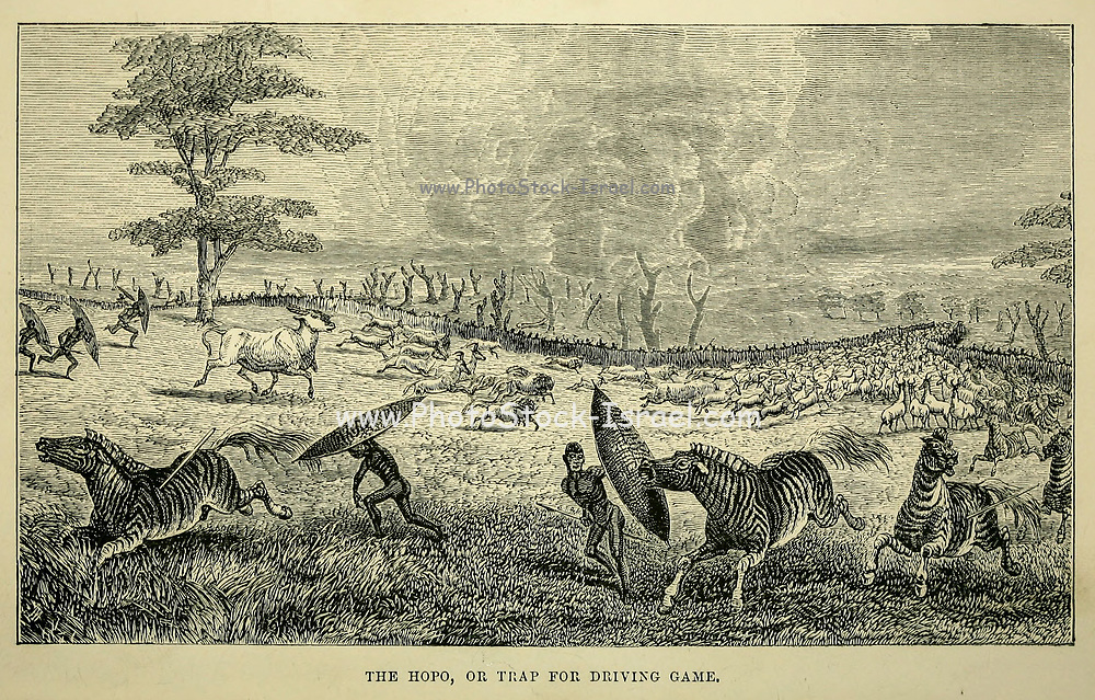 The Hopo, or Trap for driving Game From the book ' Missionary travels and researches in South Africa ' by Livingstone, David, 1813-1873; Arnot, Fred. S. (Frederick Stanley), 1858-1914; Published in London by J. Murray in 1899