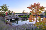Japanese Garden with lavender surrounding Saffron Fields Vineyard, Yamhill-Carlton AVA, Willamette Valley, Oregon