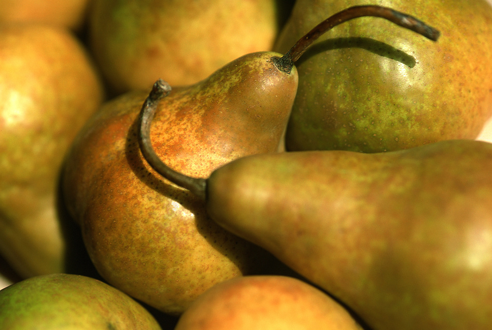 Close up selective focus photograph of some Beure Bosc pears