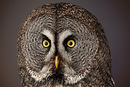 FEATURE: Owls