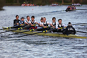 Crew: 183   Op 8+ BAND-3   Upper Thames Rowing Club   UTC-HANSON<br /> <br /> Wallingford Head 2017<br /> <br /> To purchase this photo, or to see pricing information for Prints and Downloads, click the blue 'Add to Cart' button at the top-right of the page.