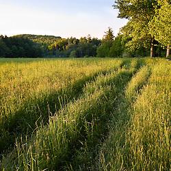 Raspberry Farm in Hampton Falls, New Hampshire.