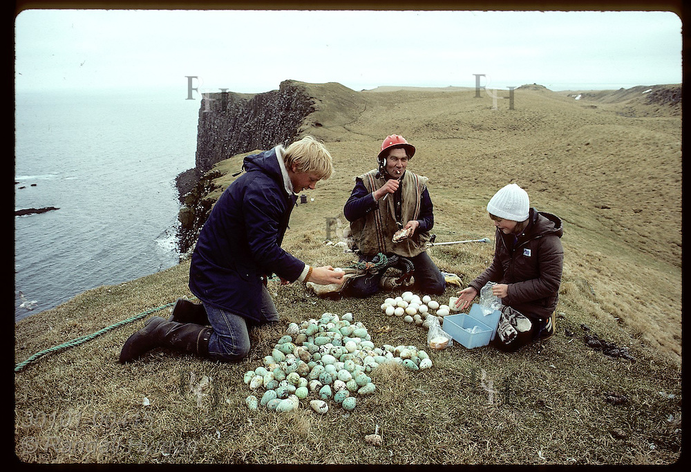 Grimsey Islanders munch a cliff-top snack after Bjarni Magnusson ascends with booty of murre eggs Iceland