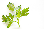 fresh parsley leaf On white Background