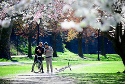 People take pictures of the cherry blossom in full bloom on the Schuylkill river banks, in the Fairmount Park section of Philadelphia, PA on April 10, 2019. Each spring the vibrant tree line proves popular amongst tourists, photographers and Instagrammers.