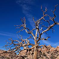 USA, California, Joshua Tree. Hidden Valley Trail