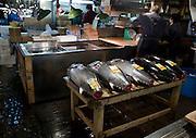 Tuna awaiting sale at Tokyo Tsukiji Fish Market..Tokyo Metropolitan Central Wholesale Market or Tsukiji Fish Market is the largest fish market in the world.