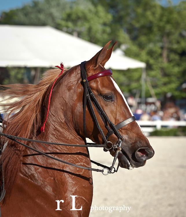 Devon at Sunset American Saddlebred Competition