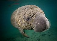 Manatee youth looks into underwater camera