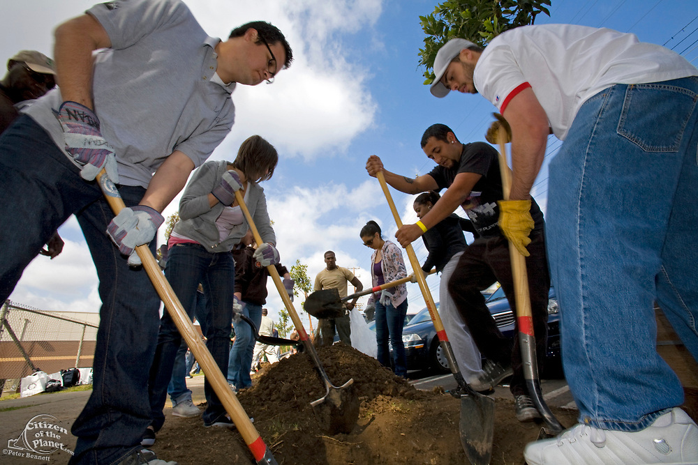 A Tree Planting in Highland Park plans to plant 100 Arbutus Trees around and along Figueroa Street. Part of the Mayor's office Million Trees LA Initiative, Community groups LA Conservation Corps, LA Causa and North East Trees are joined by local volunteers, families and area students for the planting. Los Angeles, California, USA