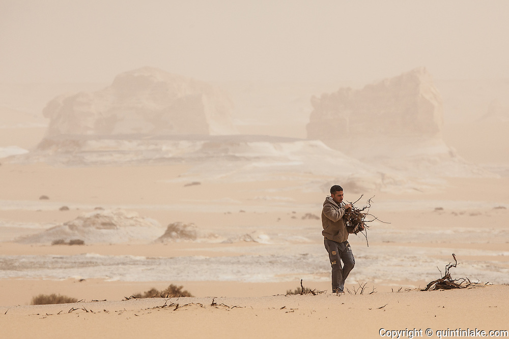 Mahmood, a Bedouin guide, collecting fire wood in the White Desert, Egypt