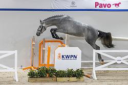 057, Cooper Z<br /> KWPN Hengstenkeuring 2021<br /> © Hippo Foto - Dirk Caremans<br />  02/02/2021