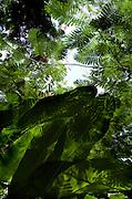 Exotic Jamaican Garden  - Goldeneye
