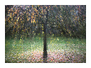 multiple exposure of tree in the round in autumn