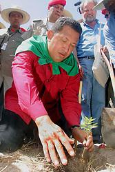 O presidente da Venezuela, Hugo Chaves, planta uma árvore durante sua visita ao Assentamento Lagoa do Junco, do Movimento dos Trabalhadores Rurais Sem Terra (MST), no município de Tapes (130 quilômetros de Porto Alegre) como programação de sua visita ao V Forum Social Mundial. FOTO:Jefferson Bernardes/Preview.com