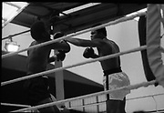 Ali vs Lewis Fight, Croke Park,Dublin.<br /> 1972.<br /> 19.07.1972.<br /> 07.19.1972.<br /> 19th July 1972.<br /> <br /> As part of his built-up for a World Championship attempt against the current champion, 'Smokin' Joe Frazier, Muhammad Ali fought Al 'Blue' Lewis at Croke Park, Dublin, Ireland. Muhammad Ali won the fight with a TKO when the fight was stopped in the eleventh round.<br /> <br /> Near the end of the bout Ali is pictured in a complete control.