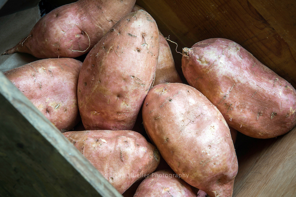Louisiana sweet potato harvest begins in late August and early September. Louisiana is the fourth-largest producer of sweet potatos in the United States.