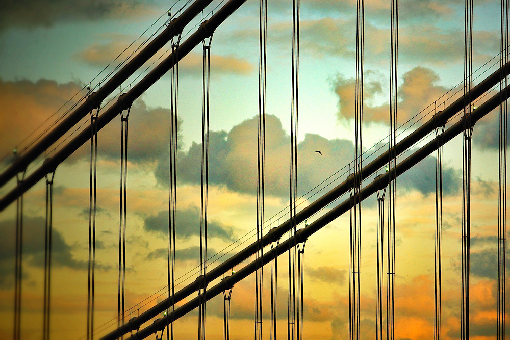A bird flys between the cabling of the George Washington Bridge at Sunset