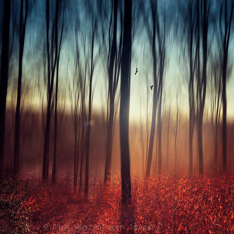 Abstraction of a forest at sunrise on a fall morning<br /> Society6 prints & more: https://society6.com/product/crying-lights_print#1=45