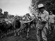 08 APRIL 2018 - SAN PA TONG, CHIANG MAI, THAILAND:  at the market in San Pa Tong (also spelled Sanpatong), a town about 30 minutes from Chiang Mai. On Saturday's, farmers and livestock dealers come to the market to buy and sell cattle and water buffalo.     PHOTO BY JACK KURTZ
