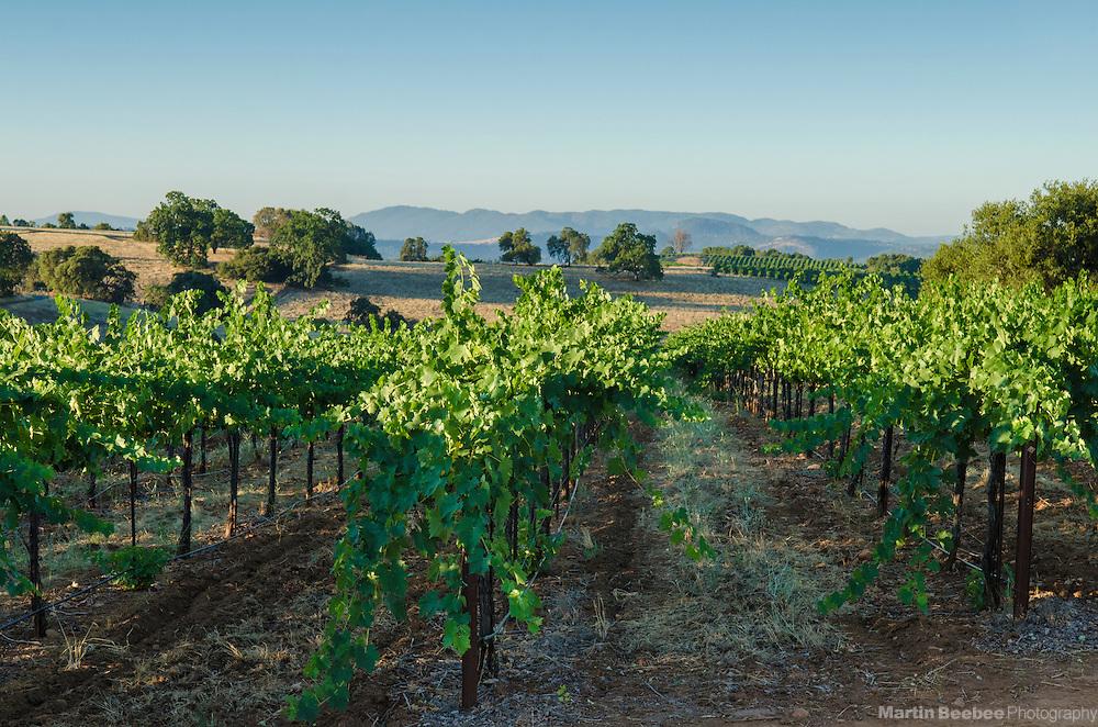 Avio Winery, Amador County, California