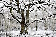 Snow covered trees on Hampstead Heath, London, United Kingdom