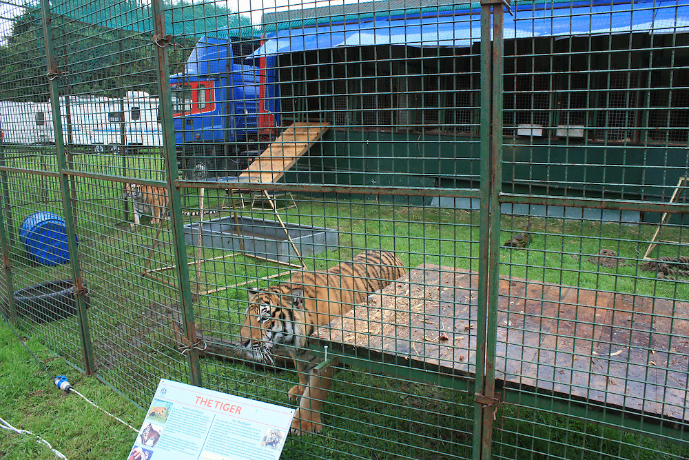 This is probably as good as it gets for big cats in a circus. This tiny cage is a far cry from their natural jungle home