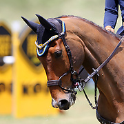 20190609 Equitazione : Fei Eventing Nations Cup