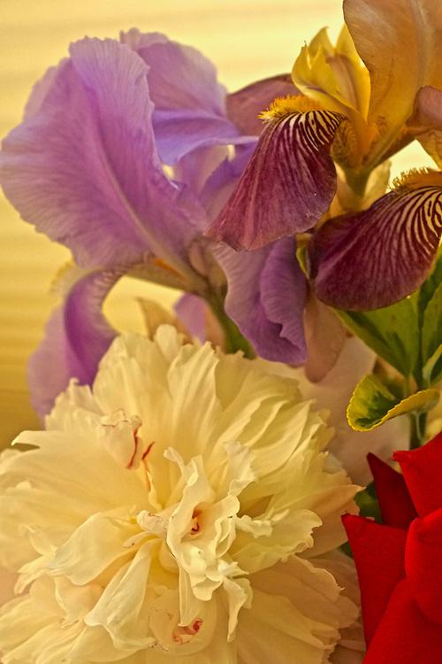 Floral arrangements, Iris and peony