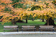 Fall foliage and 3 benches at the Painter's Circle at Stanley Park in Vancouver, British Columbia, Canada