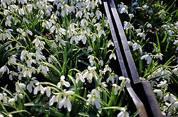 File photo dated 18/02/18 of snowdrop flowers, one of a surprising number of species becoming active months ahead of schedule as nature sightings from the public indicate Spring arrived as early as November.