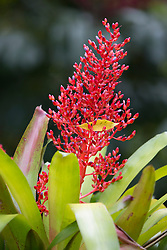 colorful tropical flower in bloom