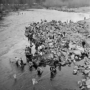 Y-560403.  Smelt fishing on the Sandy River. Camera located on the Troutdale Bridge. April 3, 1956.