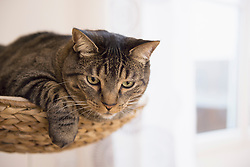 Tabby cat lying on scratching post