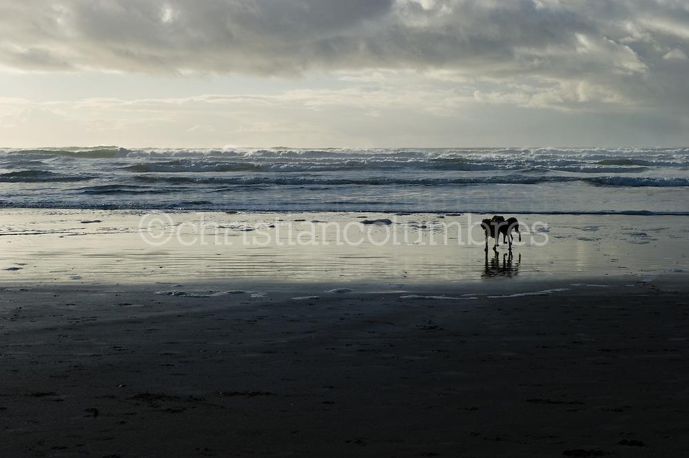 Cannon Beach - November 2010
