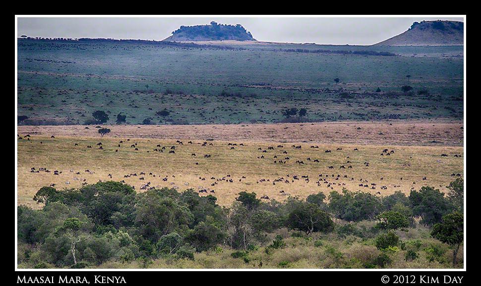 Wildebeest Far As The Eye Can See.Maasai Mara, Kenya.September 2012