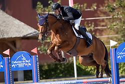 Meersman Nils, BEL, Qaramba I<br /> BK Young Horses 2020<br /> © Hippo Foto - Sharon Vandeput<br /> 6/09/20
