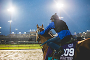 November 1-3, 2018: Breeders' Cup Horse Racing World Championships. King of Speed